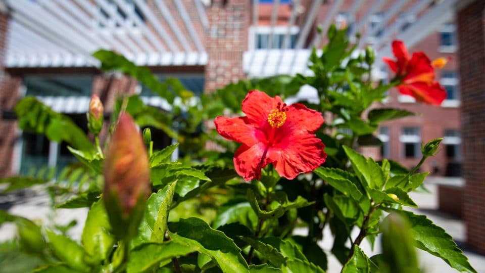 Bright flowers outside of Gerson Hall