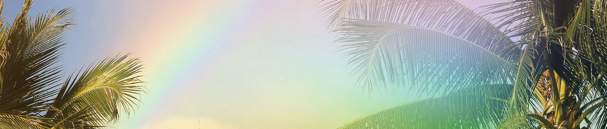 Palm trees framing a rainbow in the sky