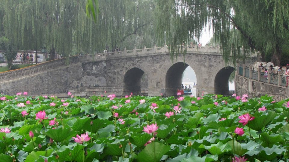 Beihai Park bridge, willows and pink lotus in Beijing, China