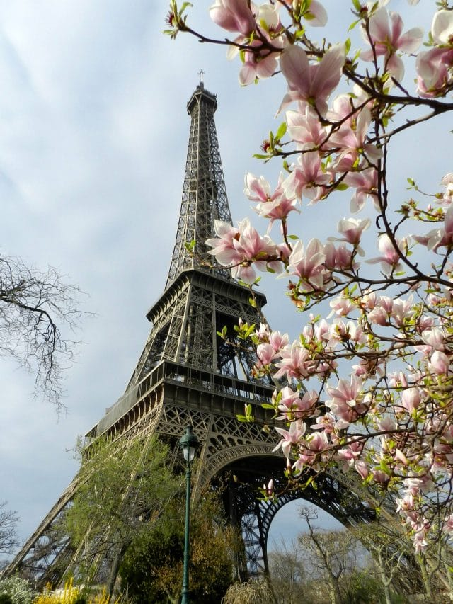 The Eiffel Tower with Japanese Magnolias in bloom